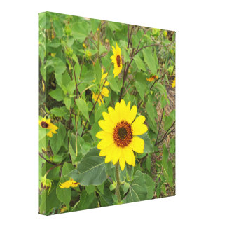Sunflowers Blowing In The Wind, Canvas Print