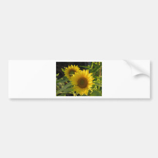 SunFlowers Bumper Sticker