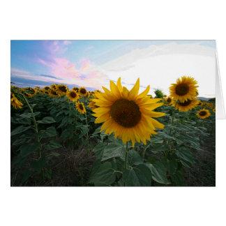 Sunflowers Closeup Sunset Tuscany Italy Card