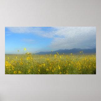 Sunflowers, Dunes & Mountains, Colorado Poster