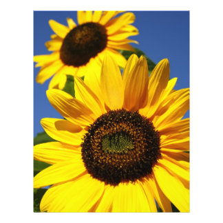 Sunflowers Flyers