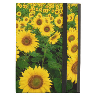 Sunflowers Forever Cover For iPad Air