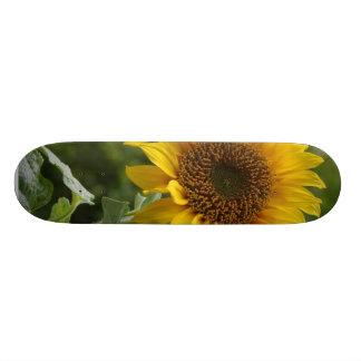 Sunflowers In Field Skate Boards