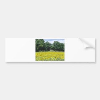 Sunflowers in Limousin Bumper Stickers