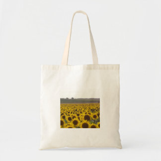 Sunflowers in Rural France