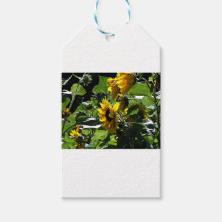Sunflowers in the summer pack of gift tags