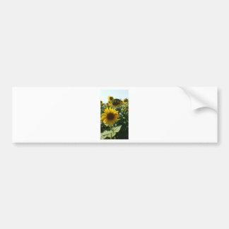 Sunflowers Kisses Bumper Stickers