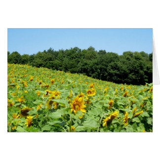 Sunflowers on a Hill greeting card