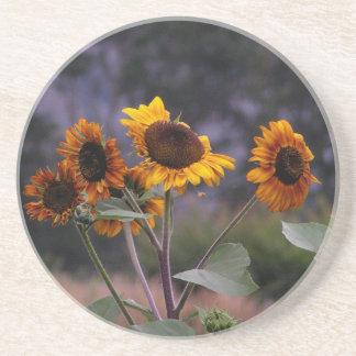 Sunflowers on display coasters
