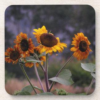 Sunflowers on display drink coaster