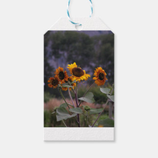 Sunflowers on display pack of gift tags