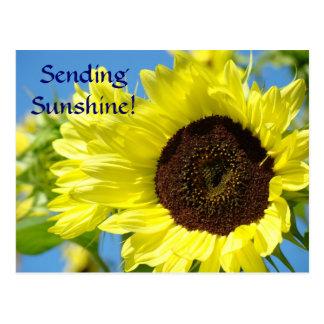 Sunflowers Post Card SENDING SUNSHINE! Hello