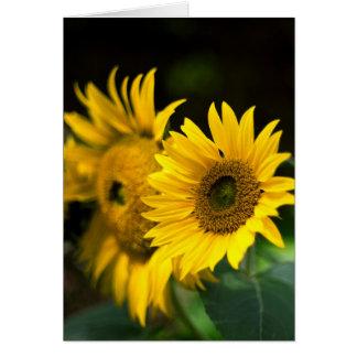 sunflowers soaking up the sun. card