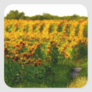 Sunflowers to Brighten your day Square Sticker