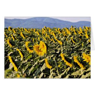 Sunflowers, Tuscany, Italy  flowers Card