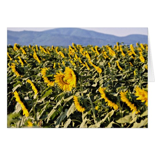 Sunflowers, Tuscany, Italy  flowers Card
