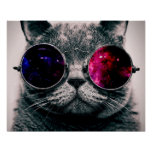 sunglasses cat poster