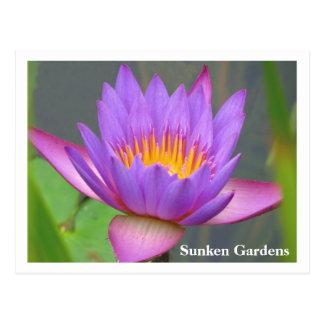 Sunken Gardens Purple Water Lily 2008 #86n 086 Postcard