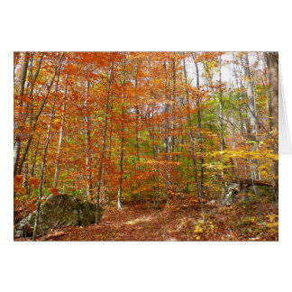 Sunlight Dappled Fall Trail at Laurel Hill Park Card