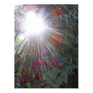 Sunlight Garden Postcard
