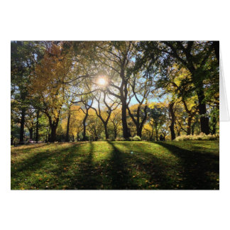 Sunlight in Central Park Card