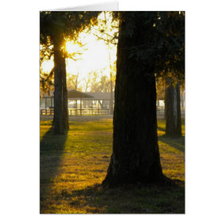 Sunlight in the trees card