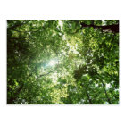 Sunlight Streaming Through the Leaves of Trees Postcard