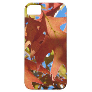 Sunlight Through Autumn Leaves iPhone 5 Covers