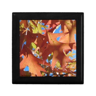 Sunlight Through Autumn Leaves Jewelry Boxes