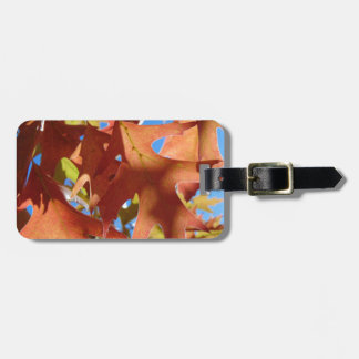 Sunlight Through Autumn Leaves Luggage Tag