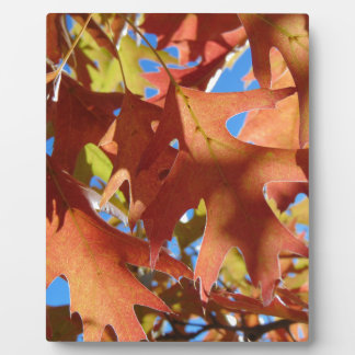 Sunlight Through Autumn Leaves Plaque