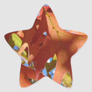 Sunlight Through Autumn Leaves Star Sticker