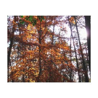 Sunlight through Fall Tree at Greenbelt Park Canvas Print