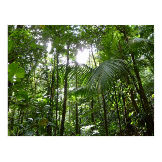 Sunlight Through Rainforest Canopy Tropical Green Postcard