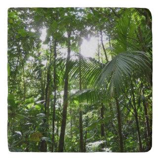 Sunlight Through Rainforest Canopy Tropical Green Trivet