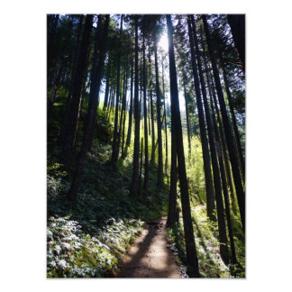 Sunlight through the Forest Photo Print