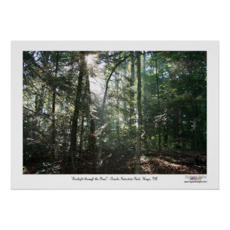 Sunlight Through the Pines Poster
