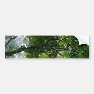 Sunlight Through Trees Bumper Sticker