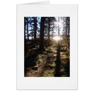 Sunlight Through Trees Card