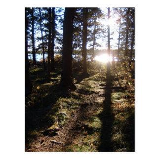 Sunlight Through Trees Postcard