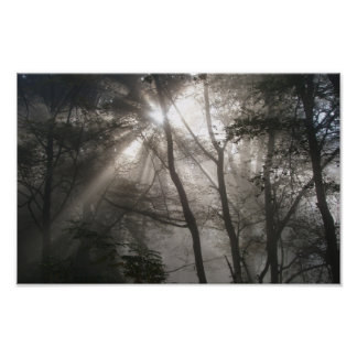 Sunlight Through Trees Poster