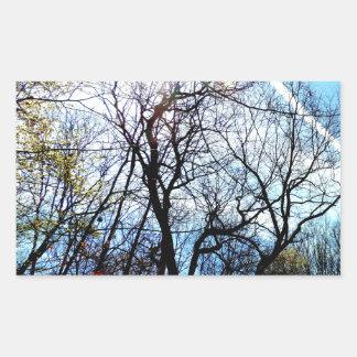 Sunlight Thru The Trees Art Photograph Image Sticker