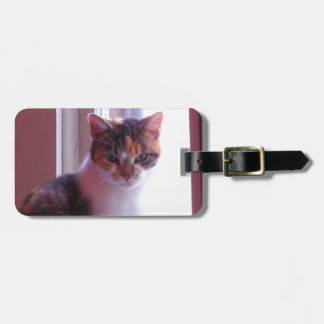 Sunlit Calico Luggage Tag