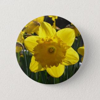 Sunlit Daffodil 2 Inch Round Button