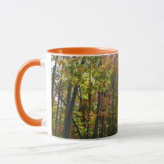 Sunlit Fall Forest Autumn Landscape Photography Mug
