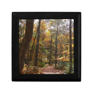 Sunlit Fall Trail in Laurel Hill State Park Gift Box