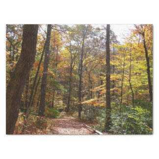 Sunlit Fall Trail in Laurel Hill State Park Tissue Paper