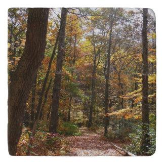 Sunlit Fall Trail in Laurel Hill State Park Trivet