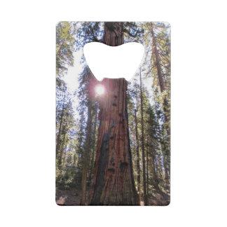 Sunlit Forest Bottle Opener Wallet Bottle Opener