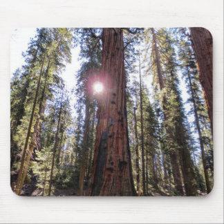 Sunlit Forest Mousepad